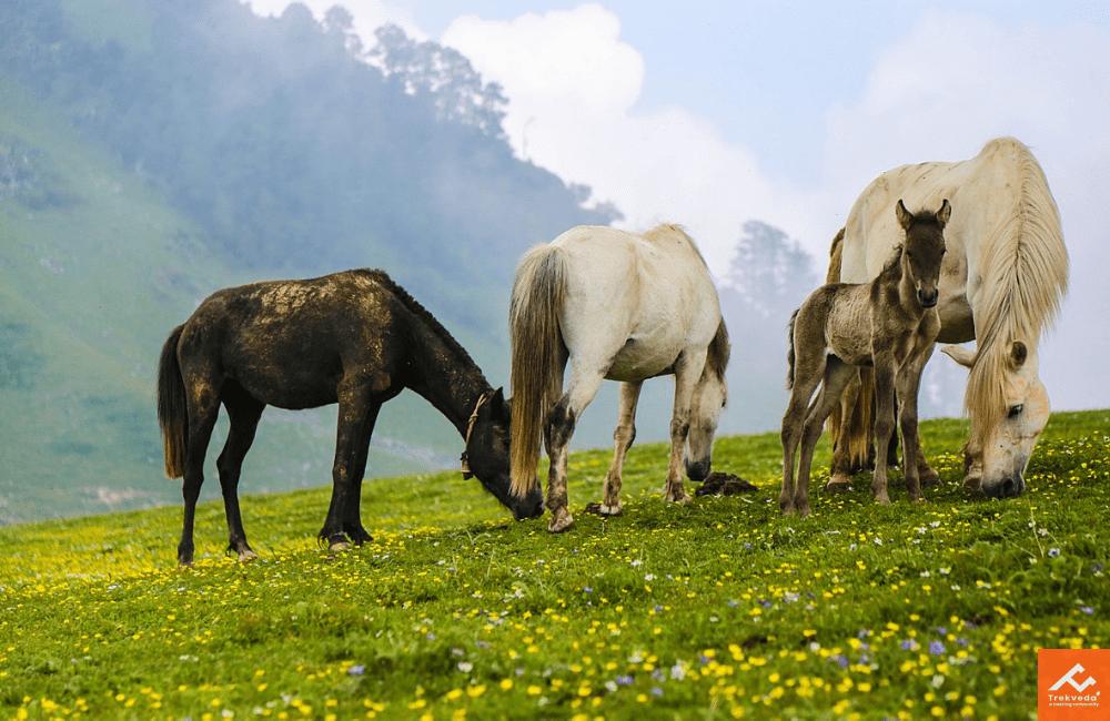 Meadows of Dayara Bugyal Trek