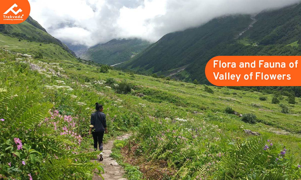 Flora and Fauna of Valley of Flowers